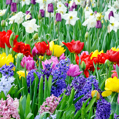 Turn on Colorful Bulbs for a Bright Spring Garden