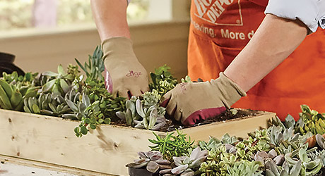 a person with gardening gloves on plants succulents in the frame