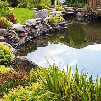 Water Gardens - Water Gardens Fish Pond