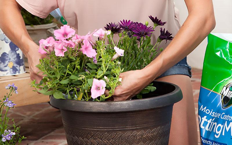 One-Step Drop N Bloom Plants