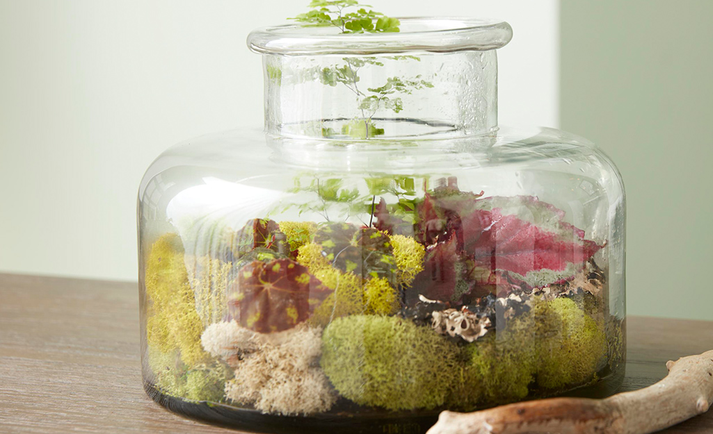 A clear glass vase centerpiece filled with moss and plants.