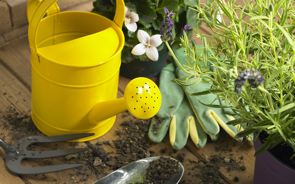 A yellow watering can beside some plants