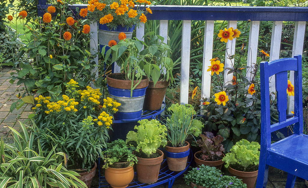 Containers of flowers and herbs on a patio