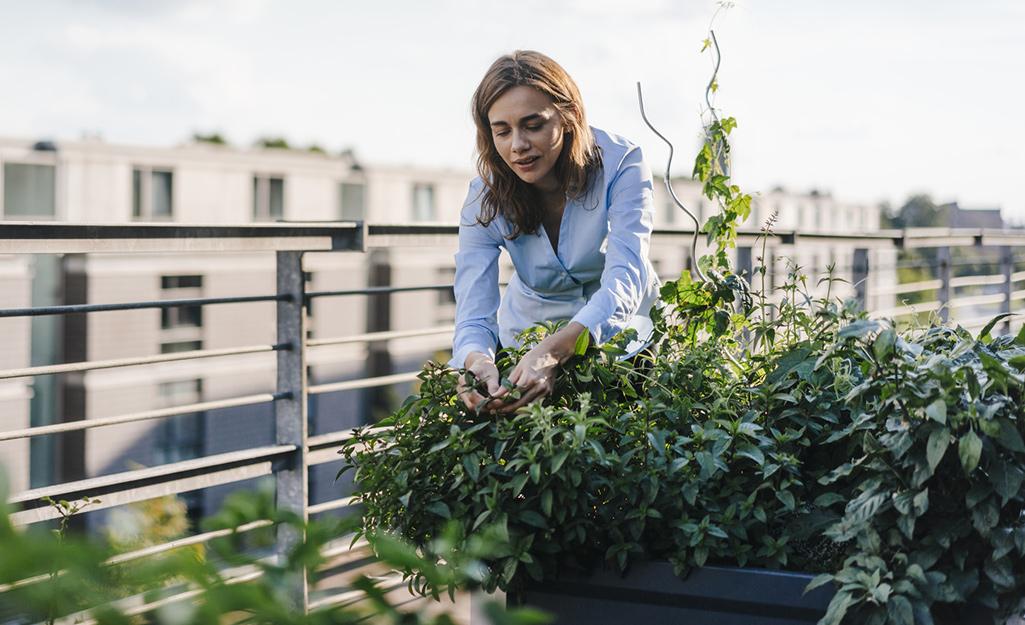 Gardener pruning plants in a rooftop garden