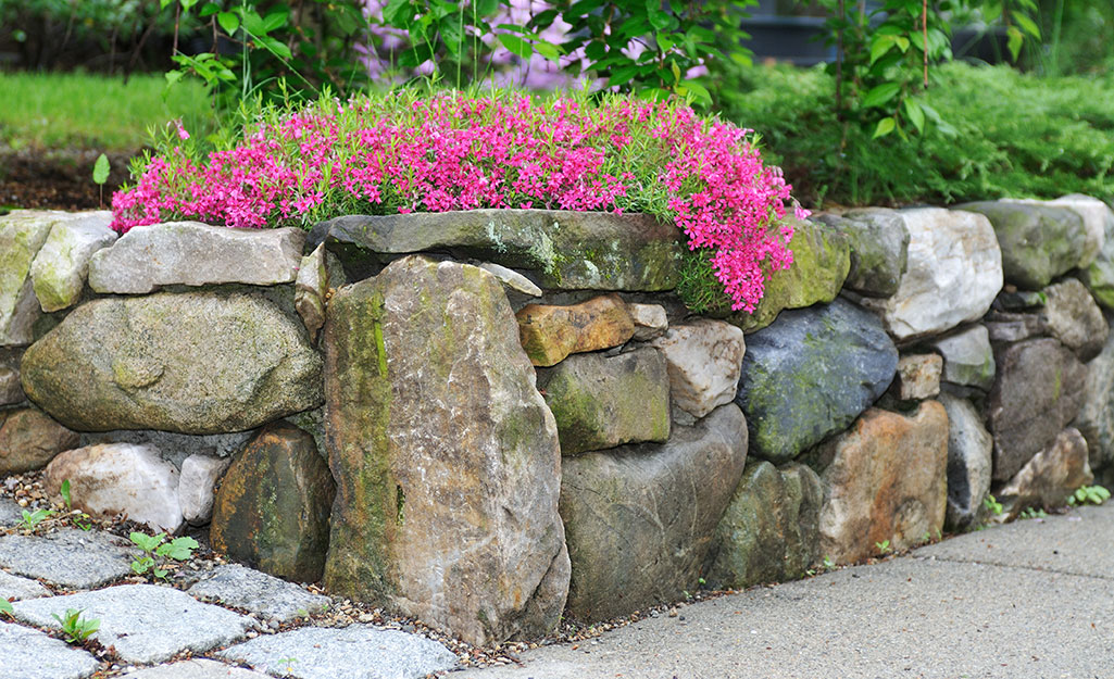 A stone retaining wall separating a garden bed from a walkway.