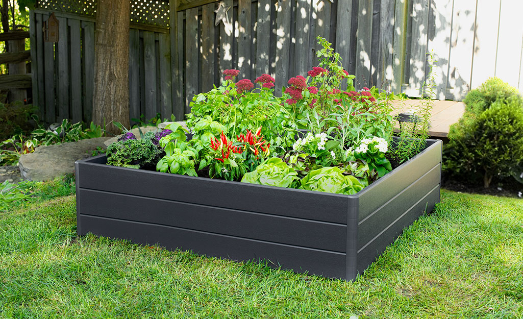 A raised garden bed filled with vegetables and flowers.