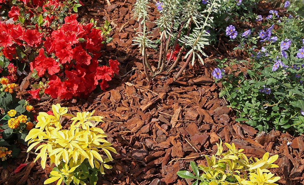 Mulch in a flowerbed.