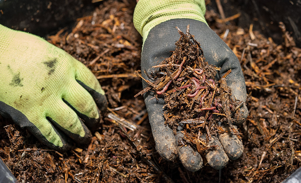 A hand holding mulch full of earthworms.
