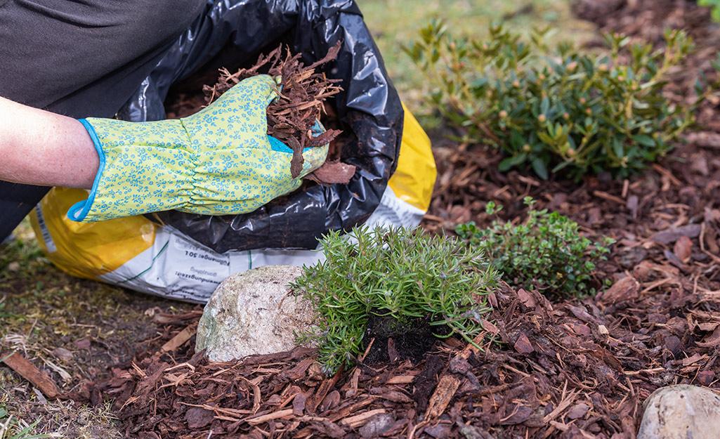 Gardener working with mulch.
