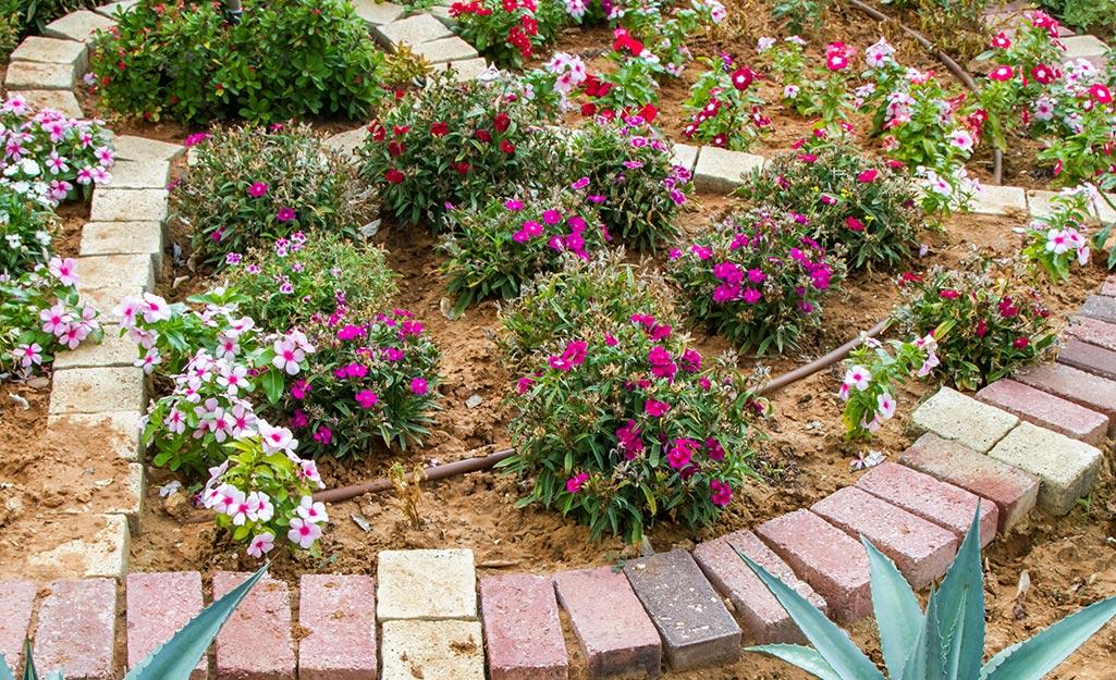 A blooming garden using mulch.