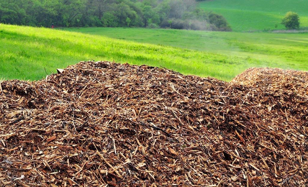 A pile of mulch.