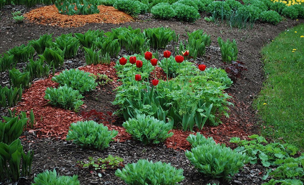 Different colored mulch in a garden.