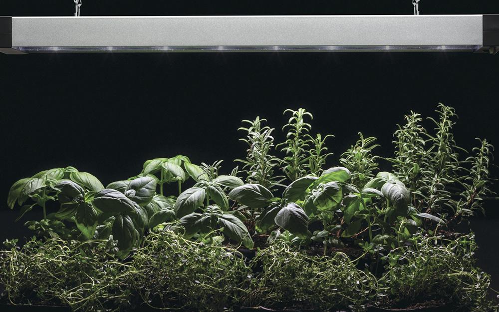 Green plants under dim LED grow lights