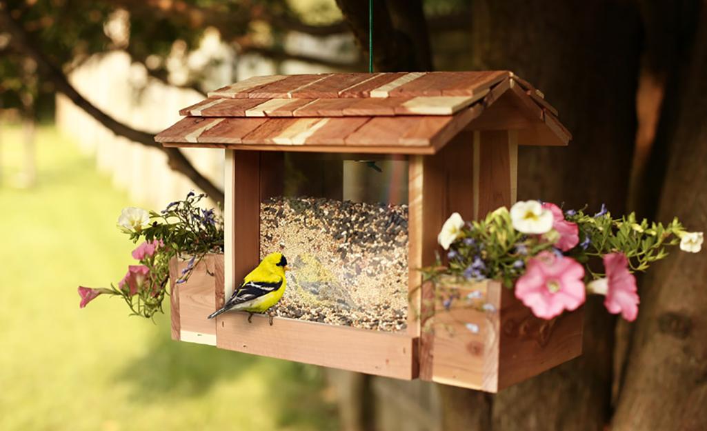 Goldfinch sits on a wood hopper bird feeder.