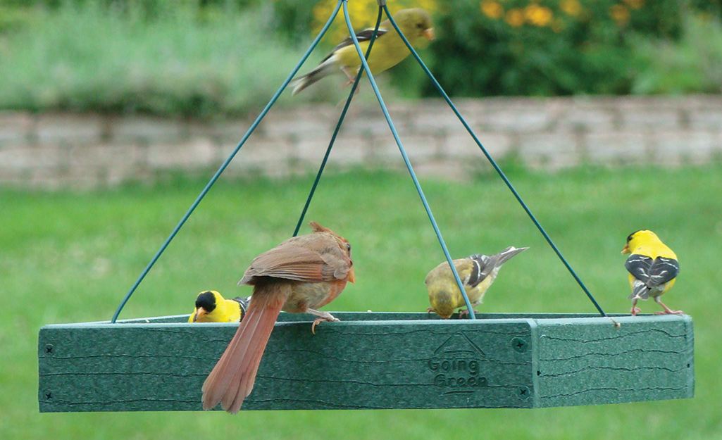 Finches and a cardinal eat from a hanging tray bird feeder.