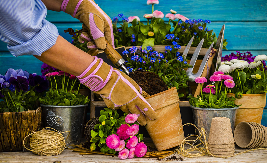 Ai đó đeo găng tay làm vườn và trồng hoa trong chậu đất nung bên cạnh các chậu cây khác.