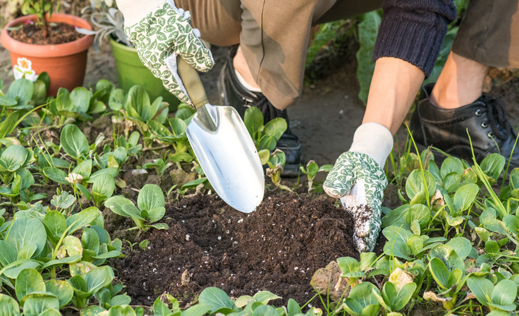 Gardener digs with trowel in soil