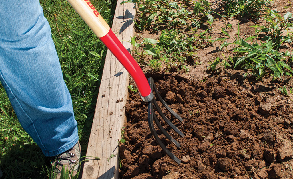 Gardener digs soil with garden fork