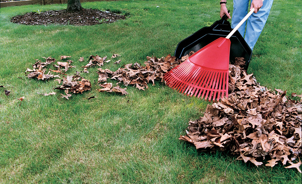 Gardener raking leaves in fall