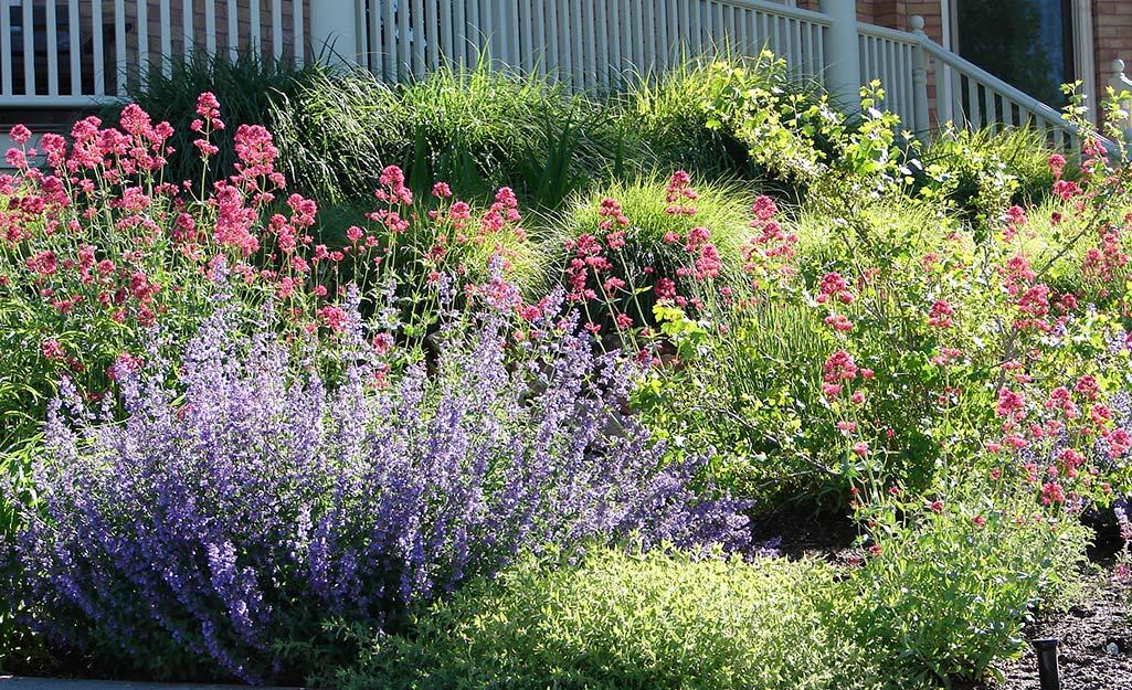 Perennials in a sloped garden bed