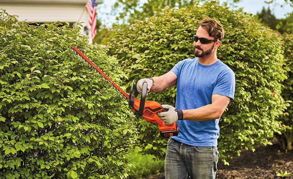 A man holds a hedge trimmer to cut shrubs.