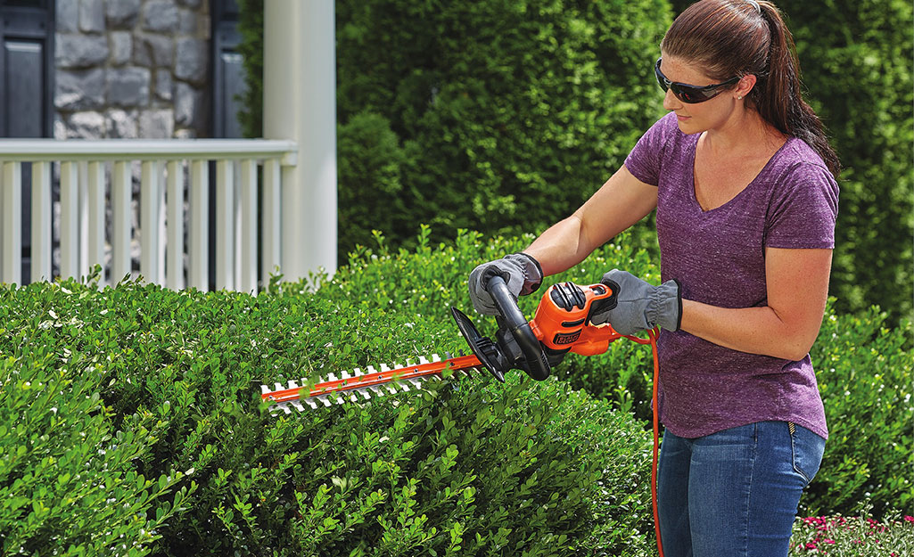 A woman uses a hedge trimmer to trim bushes.