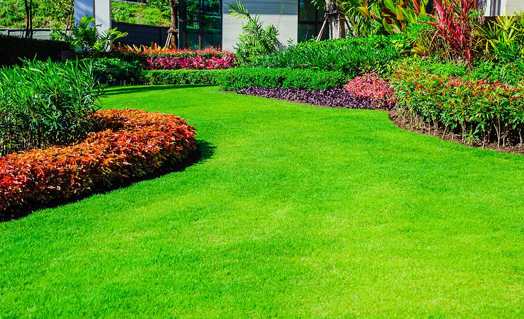 A lush, green lawn bordered by shrubs and red and purple flowers.