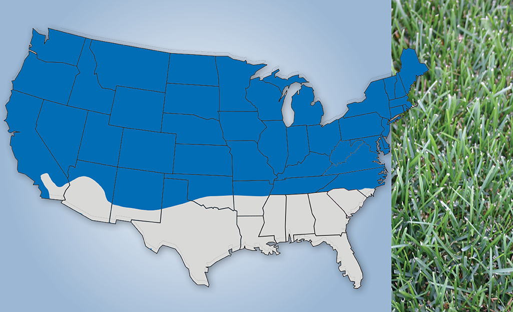 A map graphic shows the appearance and U.S. location of Kentucky Bluegrass.