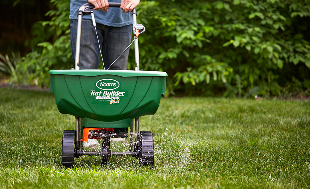 A person fertilizes a lawn with a walk-behind spreader.
