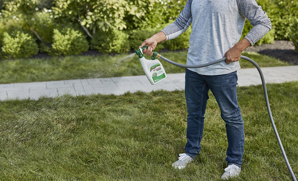 A person uses a hose attachment to spray a lawn with liquid fertilizer.