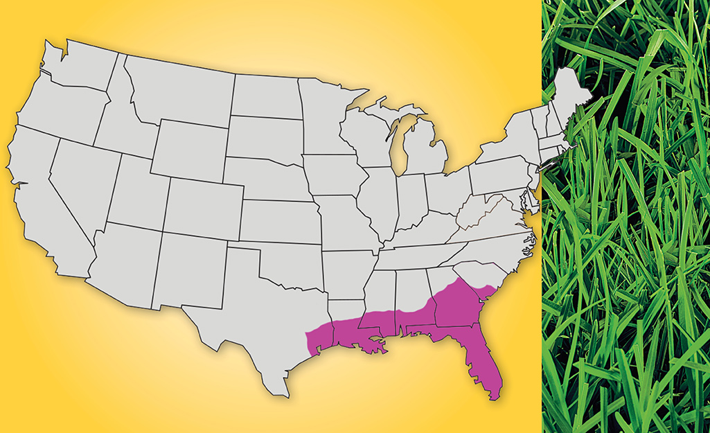 A map graphic shows the appearance and U.S. location of Centipede grass.