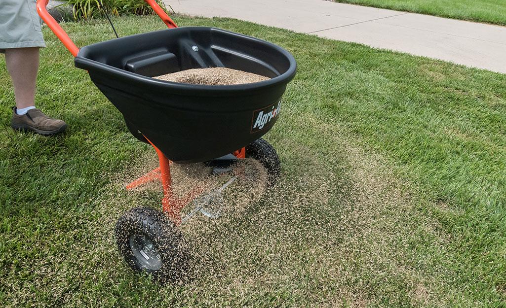 Someone using a lawn spreader to fertilize a lawn.