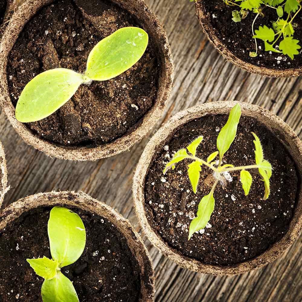 Best Grow Lights For Seedlings The Home Depot