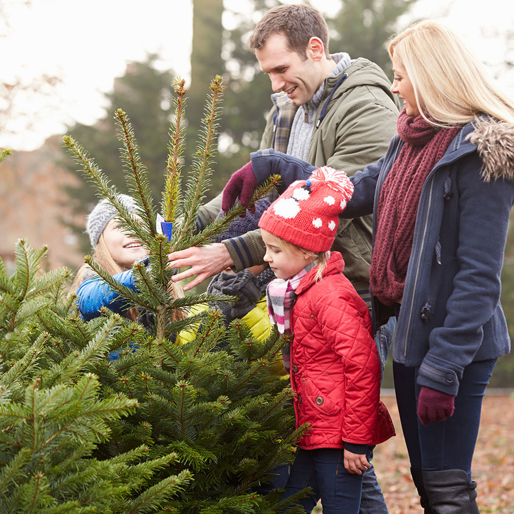Best Real Christmas Trees for You - The Home Depot