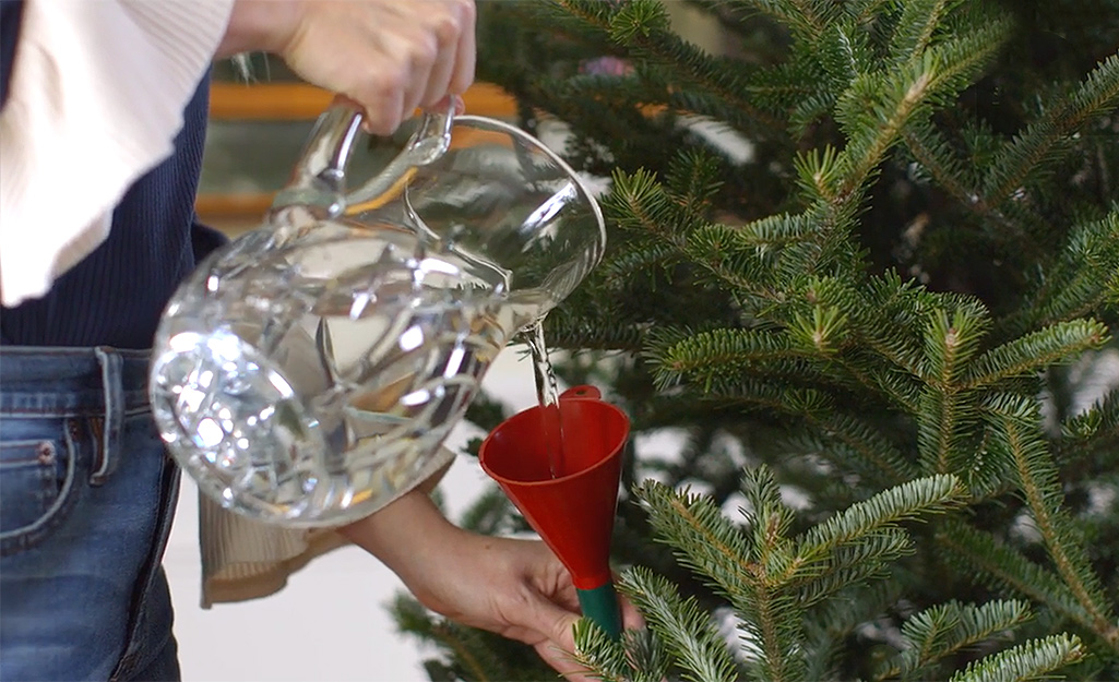 A person watering a Christmas tree.