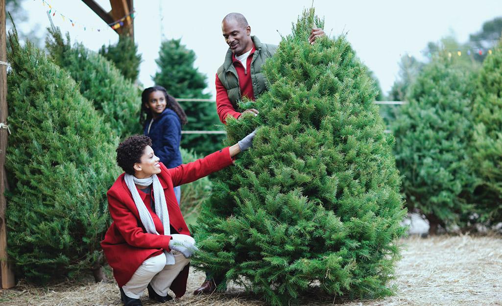 A young family choosing a Douglas fir Christmas tree.