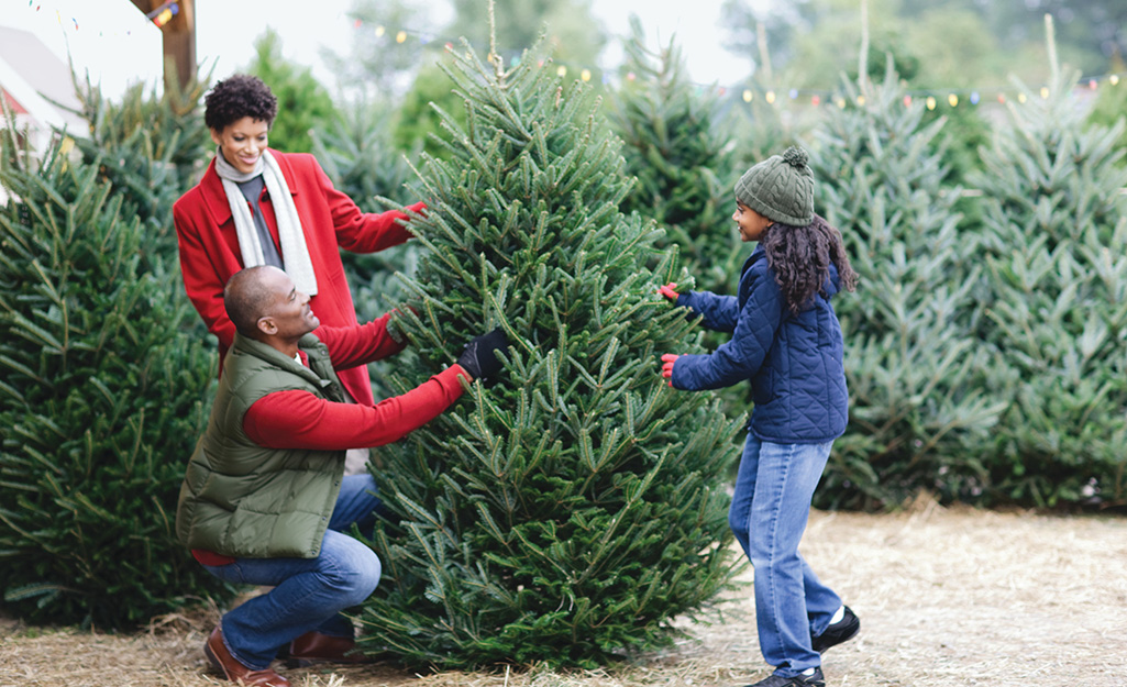 A young family choosing a Douglas fir Christmas tree.
