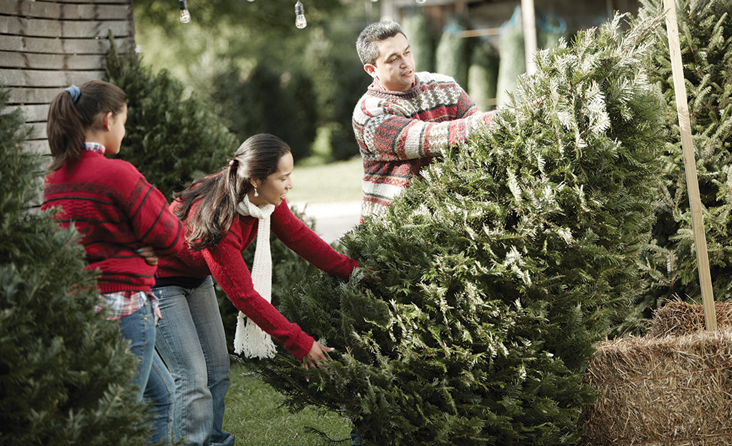 A family choosing a grand fir Christmas tree.