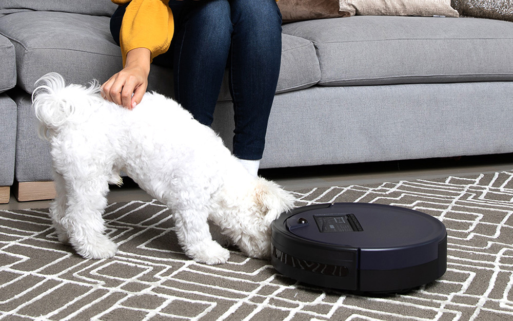 A small dog sniffing a robot vacuum