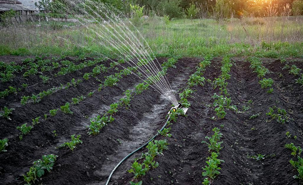 Sprinkler watering a garden.