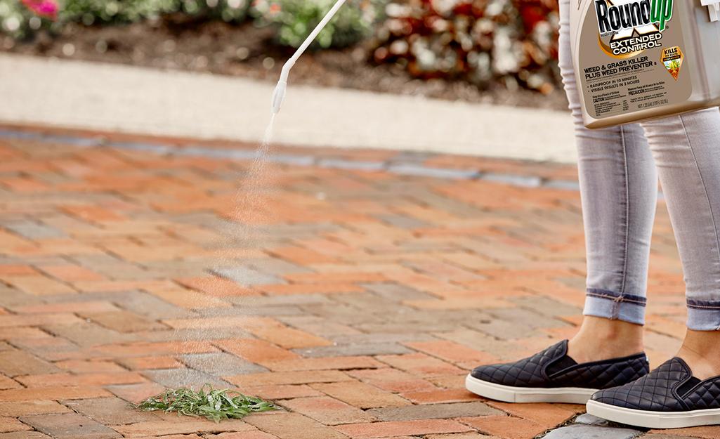 Một người sử dụng thuốc diệt cỏ dại trong dụng cụ bôi cây đũa phép trên cỏ dại mọc giữa một số viên gạch.
