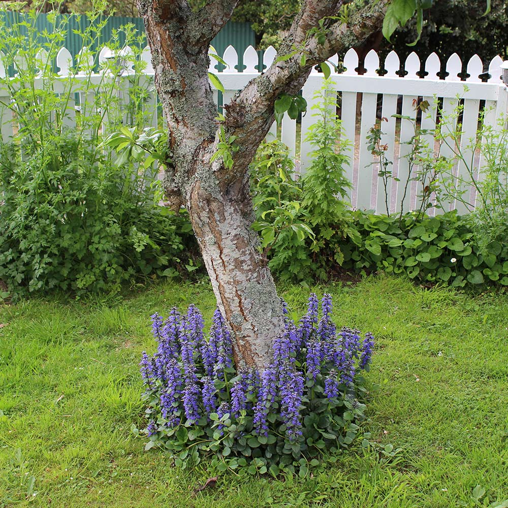 Perennial ground cover surrounding a tree