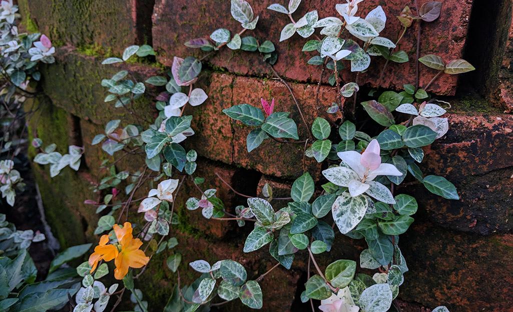 Groundcover foliage in a garden