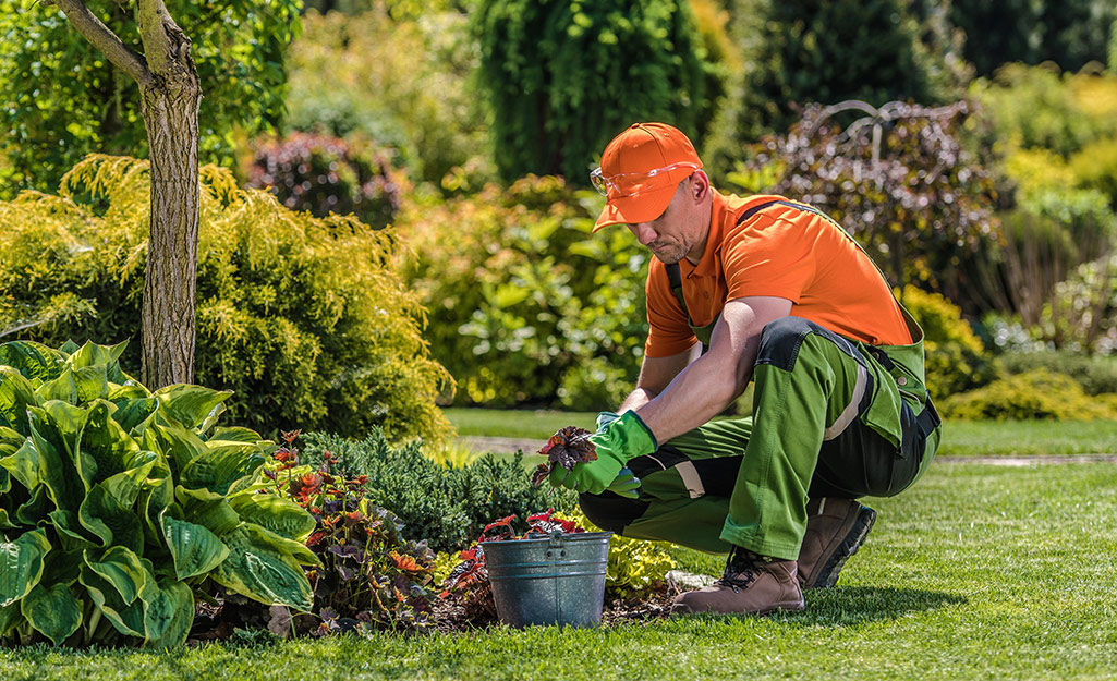 Gardener plants ground covers in a border
