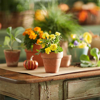 Bring the Harvest to the Table with These Centerpiece Ideas