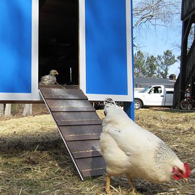 Build a Chicken Coop Pt.2