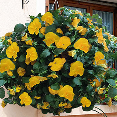 Build a Round Planter for Pansies