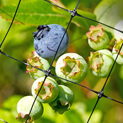 Bye-Bye Birdie. Protect Berries from Hungry Animals