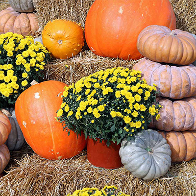 Celebrate the Season by Decorating for Fall
