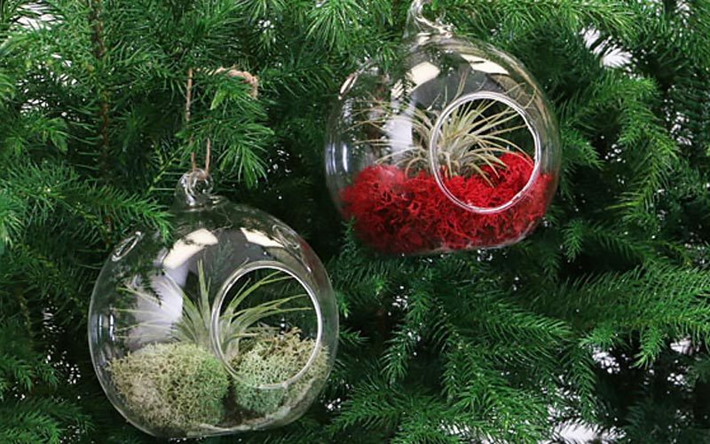 Christmas Decorating Made Simple With Air Plants The Home Depot